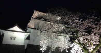 夜の小田原城と桜