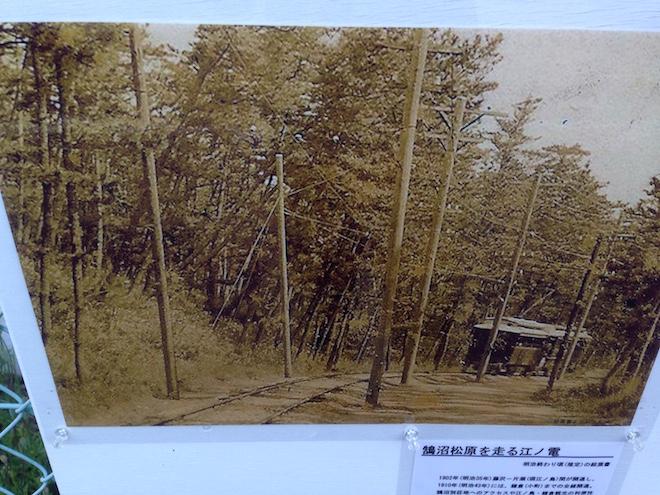 鵠沼の松林